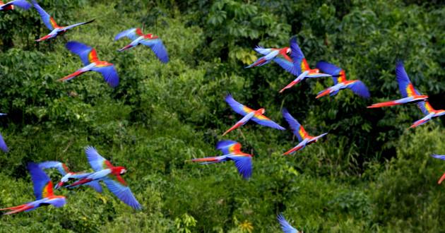 Amazonia Ecoturismo: Las 7 Maravillas Naturales del Mundo