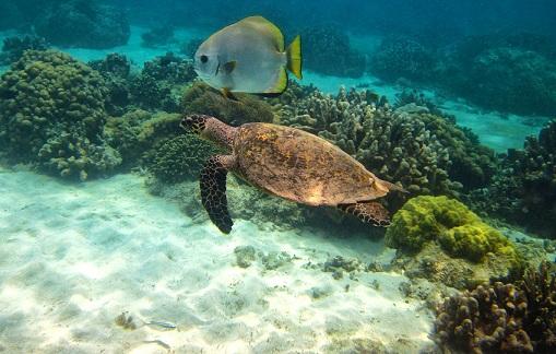 Fauna única Madagascar Los mejores destinos turísticos para el 2013