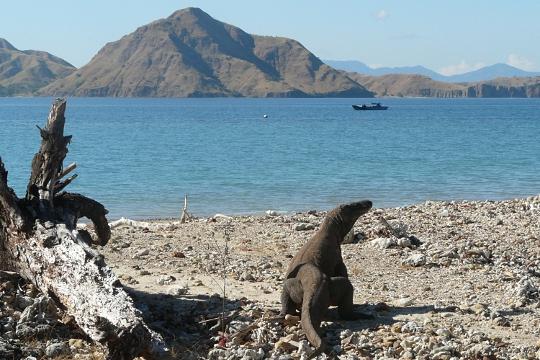 Isla Komodo Ecoturismo: Las 7 Maravillas Naturales del Mundo