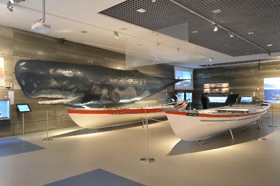 Museo de la Ballena Un hermoso destino turístico: la isla Madeira