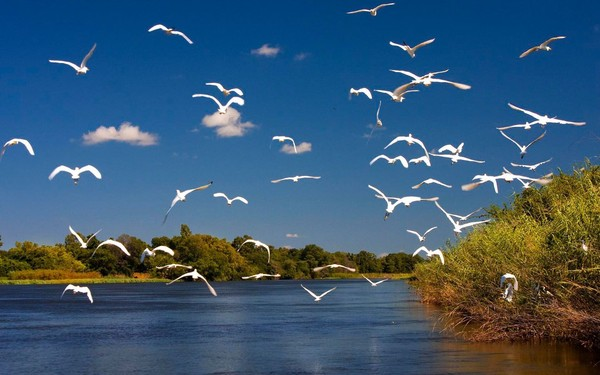 Botswana Los mejores lugares para pasar tu luna de miel en el 2013