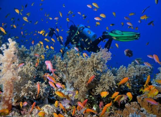Parque Natural de Ras Mohamed Conoce Egipto: la cuna de las civilizaciones