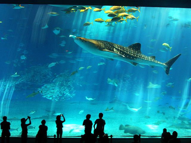 Acuario Conozcamos el acuario más grande del mundo