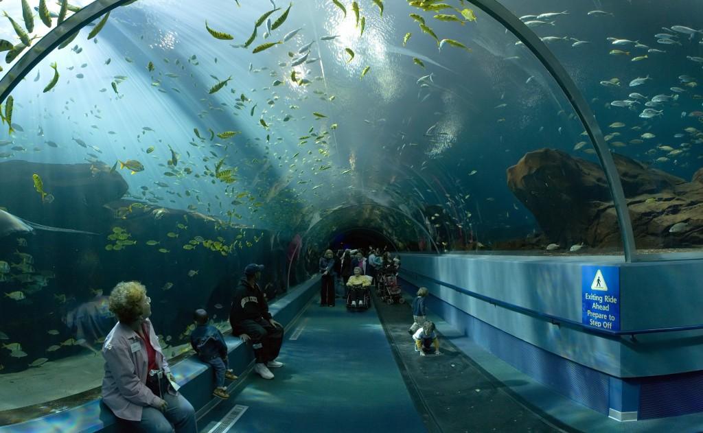 Georgia Aquarium Conozcamos el acuario más grande del mundo