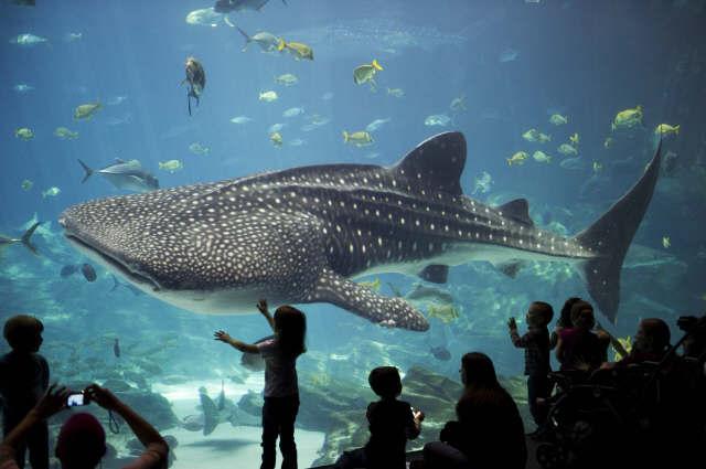acuario georgia  Conozcamos el acuario más grande del mundo