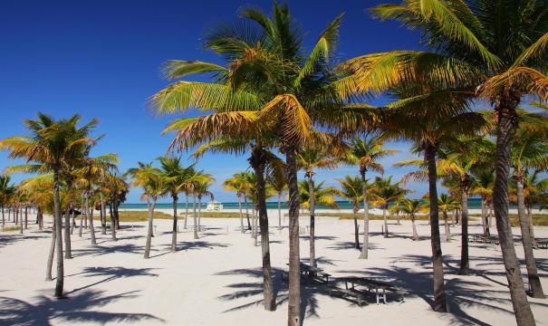 Crandon Park Beach Las playas más populares de Miami