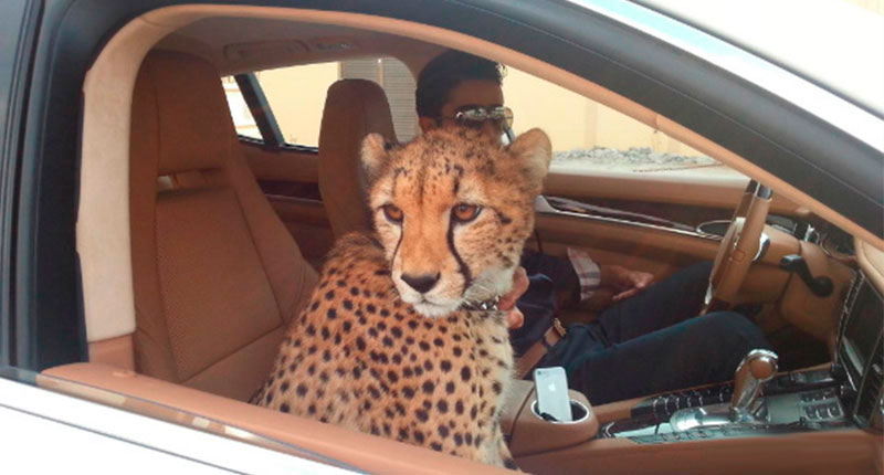 viajar con animales exóticos Consejos para viajar con mascotas exóticas
