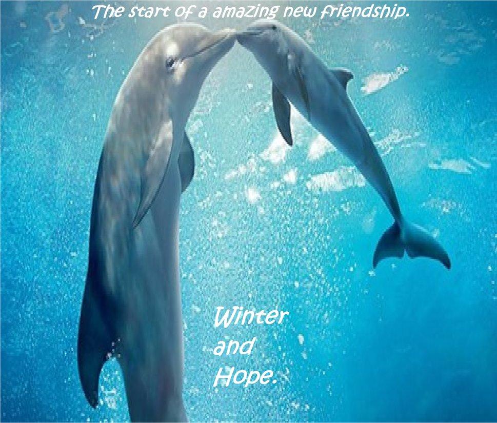 Winter y Hope Consejos para visitar a los famosos delfines Winter y Hope